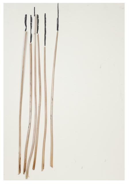 Conversation 06, 2013, charcoal,plants /paper, 98 x 68 cm